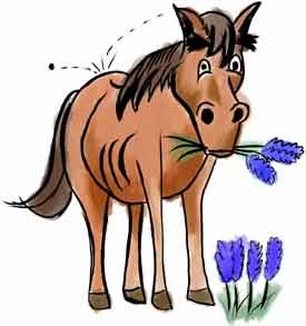 Horse Chewing Flower
