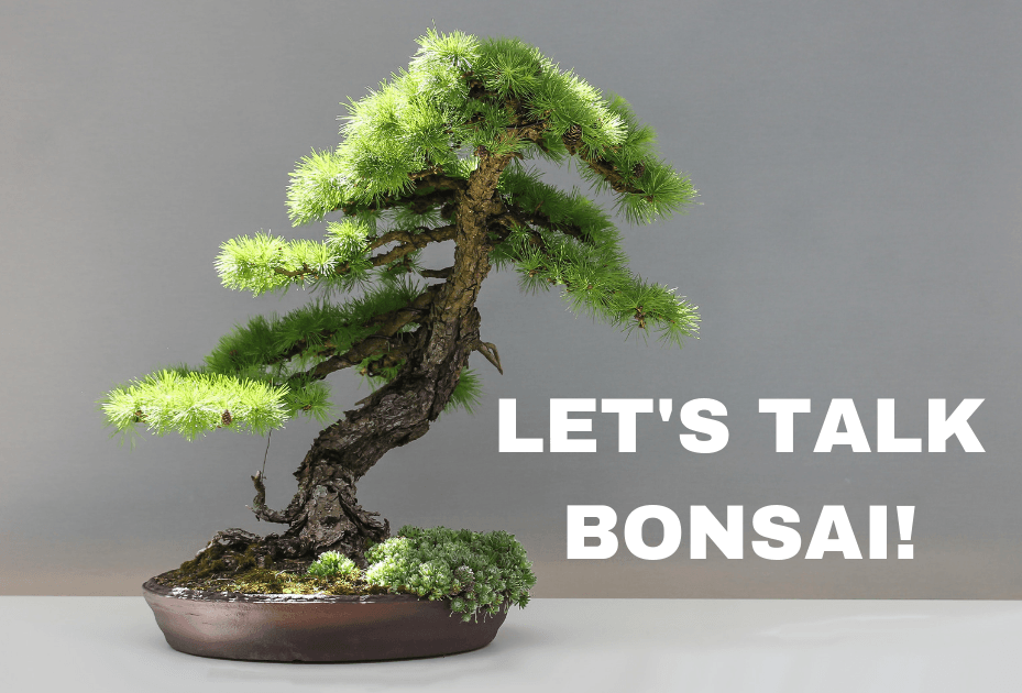 Let's Talk Bonsai! Bonsai Basics at the Library on Saturday, May 18 at 2 p.m.