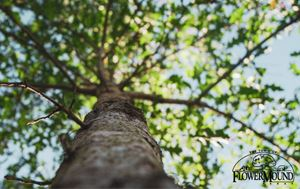 photo taken looking up at the trunk of a tree with green leaves above