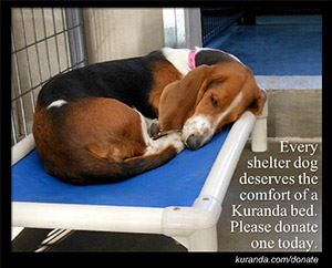 Link to Kuranda Bed Wish List