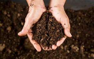 two hands holding up a pile of dirt