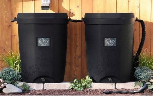 Ivy rain barrels standing under a rain gutter on a house